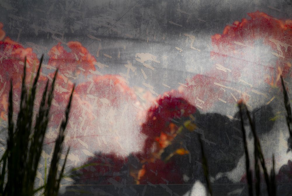 An abstract painting of red flowers.