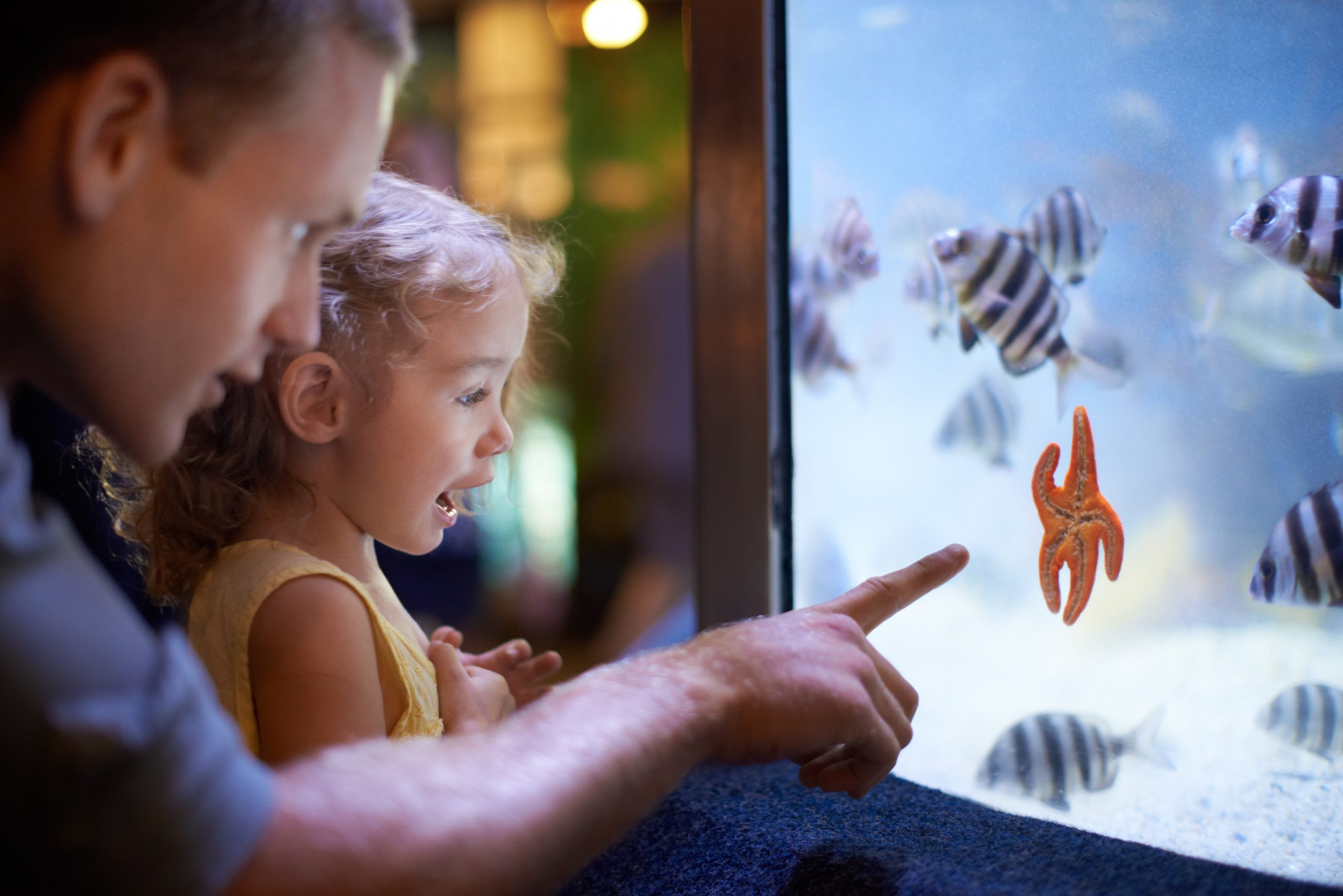 A father and daughter spend time looking at the fish in an aquarium.